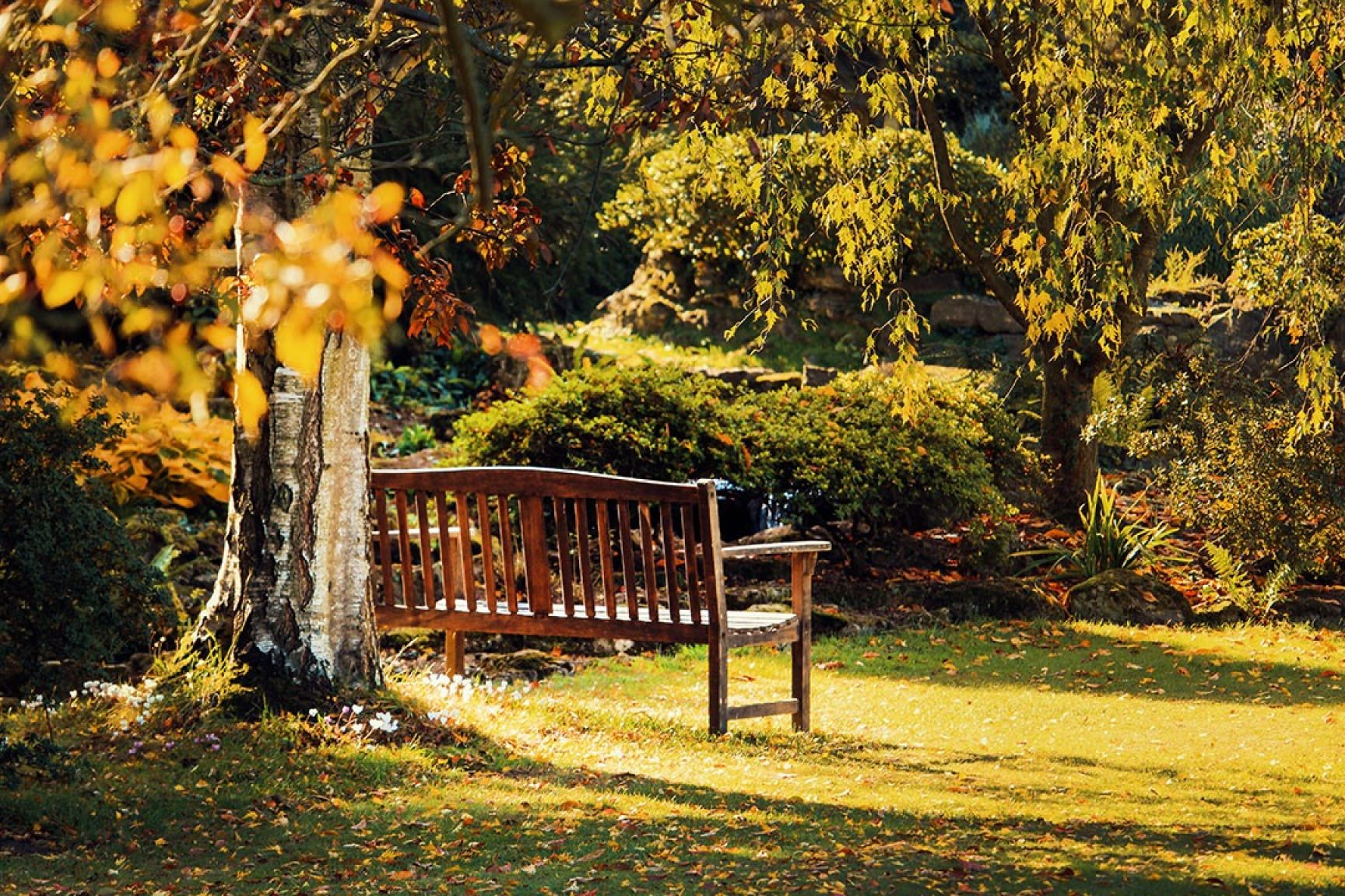 A park, there is a bench next to a tree and it is lit up by the sun.