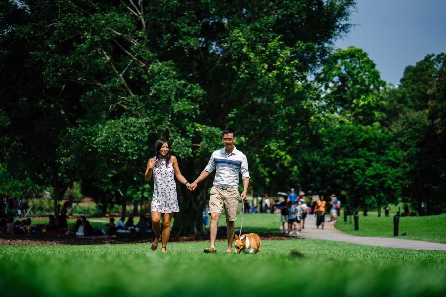 A couple is walking their dog through a park. It's sunny and the grass and trees are very green.