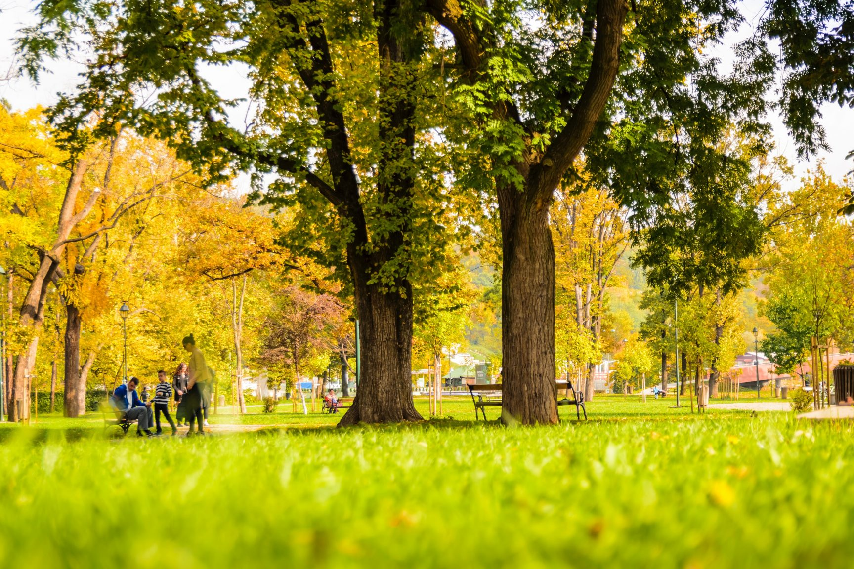 A park full of trees, the grass is green and the tree leaves are starting to turn yellow.